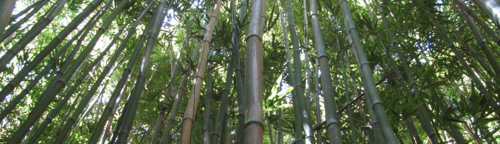 Bamboo, Massage Therapy with Moon Dickson, Freeland, Langley, WA, South Whidbey